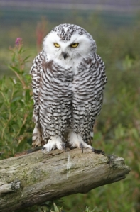 "Content Marketing can Make Selling as Easy as Falling Off a Log; Owl Says, ""Try Me."""