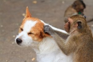 Be as clear as a monkey checking for fleas on a dog... By the way, where's the logic behind this?