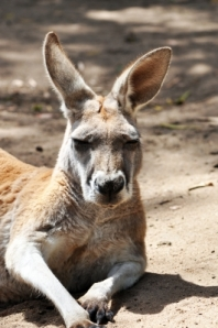 "Kangaroo: ""I guess, I am just too cute to be ignored. Share me"""