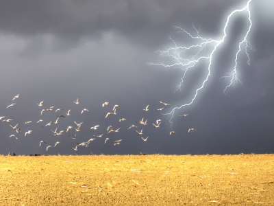 The speed of the birds (print media) will also be slower than that of lightning (new media)