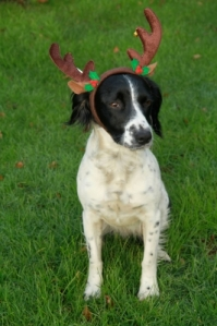 Dog: Being a reindeer has nothing to do with me!