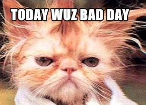 Image credits: www.cat-pause.com