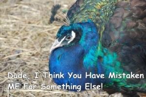fake twitter bird