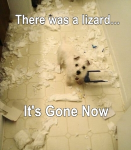 Image credits: glendaledoggrooming.com